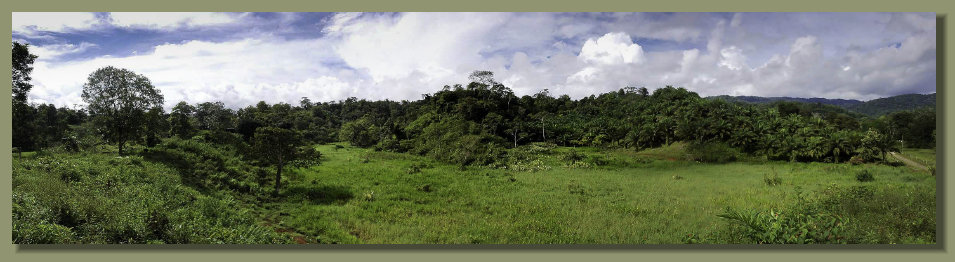 A Forest Farm Land in the central Osa Peninsula, with Oil Palm Plantation , good rainforest, Frees Water Springs. A Real Estate