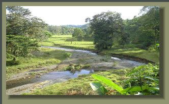 17 Hectares of Farm land with River, Springs, 	 Forest, Pastureland, Oceanview. 	 Great for farming or Eco Tourism at a Bargain Price.