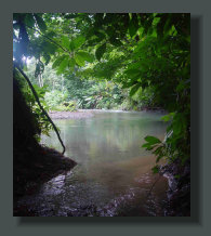 A Fresh Water River runs Inside a Forest Property Land in the Osa Peninsula, South Costa Rica