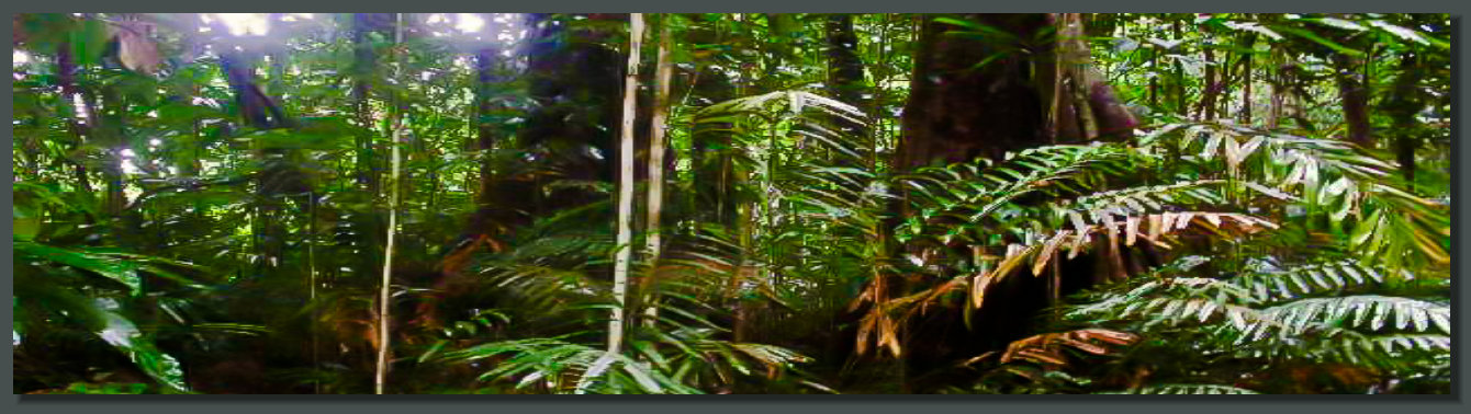 Big Trees are always present in a Pristine Rainforest Land Property in the Osa Peninsula