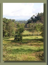 Good Pasture land as this is not easy to find in the Osa Peninsula Properties for sale