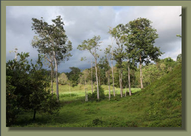 Great Farm Land in the Osa Peninsula, good for any kind of crop or cattle breeding
