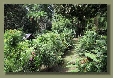 The Garden with a lot of fruit trees and tropical flower of a Costa Rica Real Estate Land