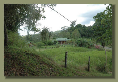 a view of the new House, from the old farm house that was the only one in this great Osa Peninsula  Real Estate