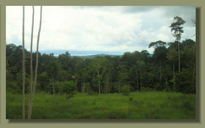 The Oceanview from the top of the Forest Farm Land Property in the Osa Peninsula