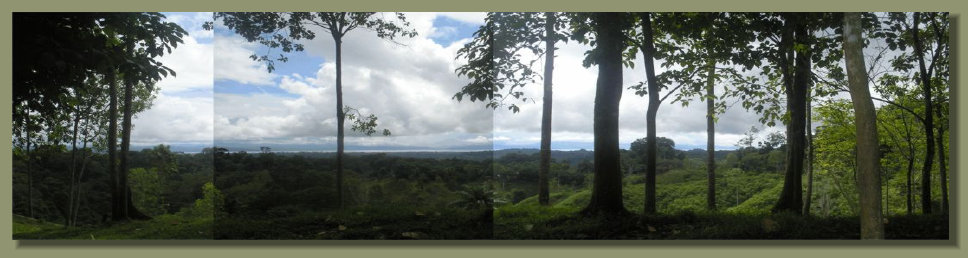 A Panoramic view of the Forest Farm Land in the Osa Peninsula, with a view of the Golfo Dulce