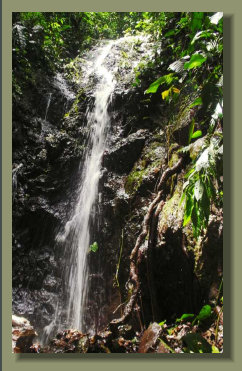 One of the several waterfalls that are present in this FOrest Land in the central ridge of the Osa Peninsula, great real estate
