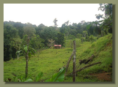 A simple wooden House in the pastureland of this Forest Farm Real Estate of the Osa Peninsula
