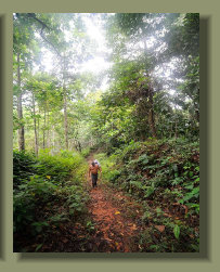 The trail access to the Forest Farm Land that is located on the Mountains of the Osa Peninsula, Costa Rica