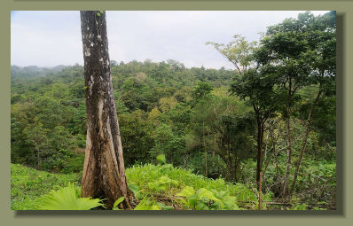 A view of the Beautiful Rain Forest that cover a part of this Forest Farm good for Cattle breeding too