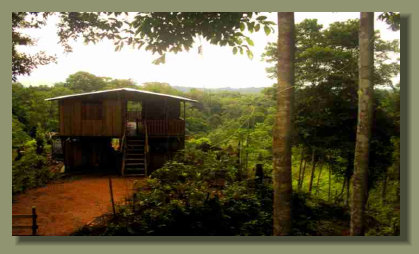 A simple wooden house in the Farm Land area of a Rainforest  Property in the Osa peninsula, Costa Rica