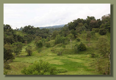 the nice pasture land in the valley of this Osa PEninsula Farm Forest Land
