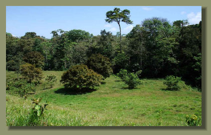 The Pasture land in the flat area of this Farm Land Osa Peninsula Property