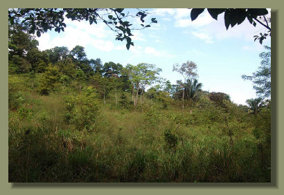 the hill of the Osa PEninsula Property with a lot of Pasture Land and Forest Land with Water Springs
