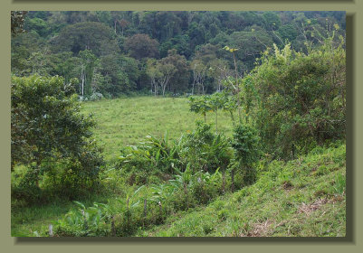 the flat pasture land of this Farm Land Forest Land in the south of Costa Rica Real Estate