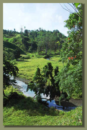 Another Farm Land Forest Land in the central Osa Peninsula with River and Fresh Water Spring A Real Estate