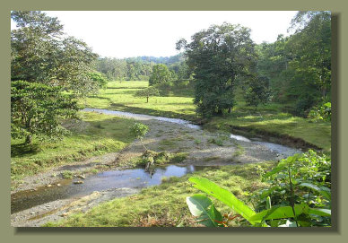 A Farm Land Forest Land in the central Osa Peninsula with River and Fresh Water Spring A Real Estate