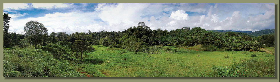 A  Farm Forest Land Palm Plantation and good fresh water springs in the Osa Peninsula Real Estate areaClose to Golfo Dulce
