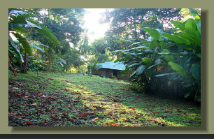 the garden around the Forest Land Farm Land House of this Osa Peninsula Property